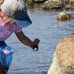 Nature Day Camp, Pott's Point Preserve, Harpswell